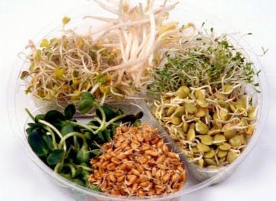 Ancient Chinese Medicine   seeds for germination