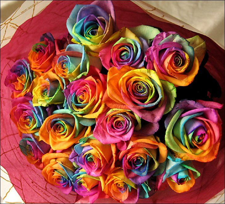 Rainbow roses all colors in one rose fun guerilla for Rainbow colored rose