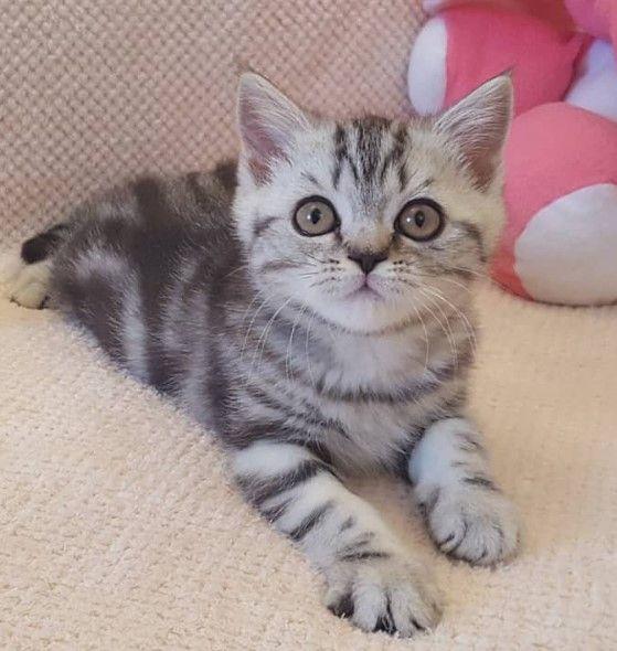 250 Scottish Cat Names | Best Cat Names | Cat names, Cats