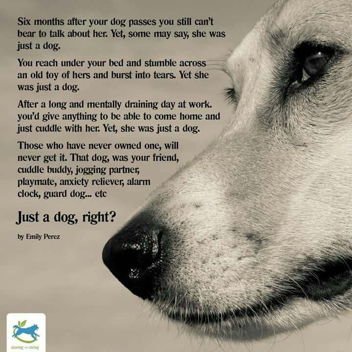 I can say the same about all my beloved pets; waiting for me ...