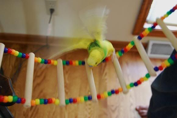 Diy Beaded Rope Ladder Instructions Lots Of Pictures Talk Budgies Forums Parakeets Pinterest And Beads