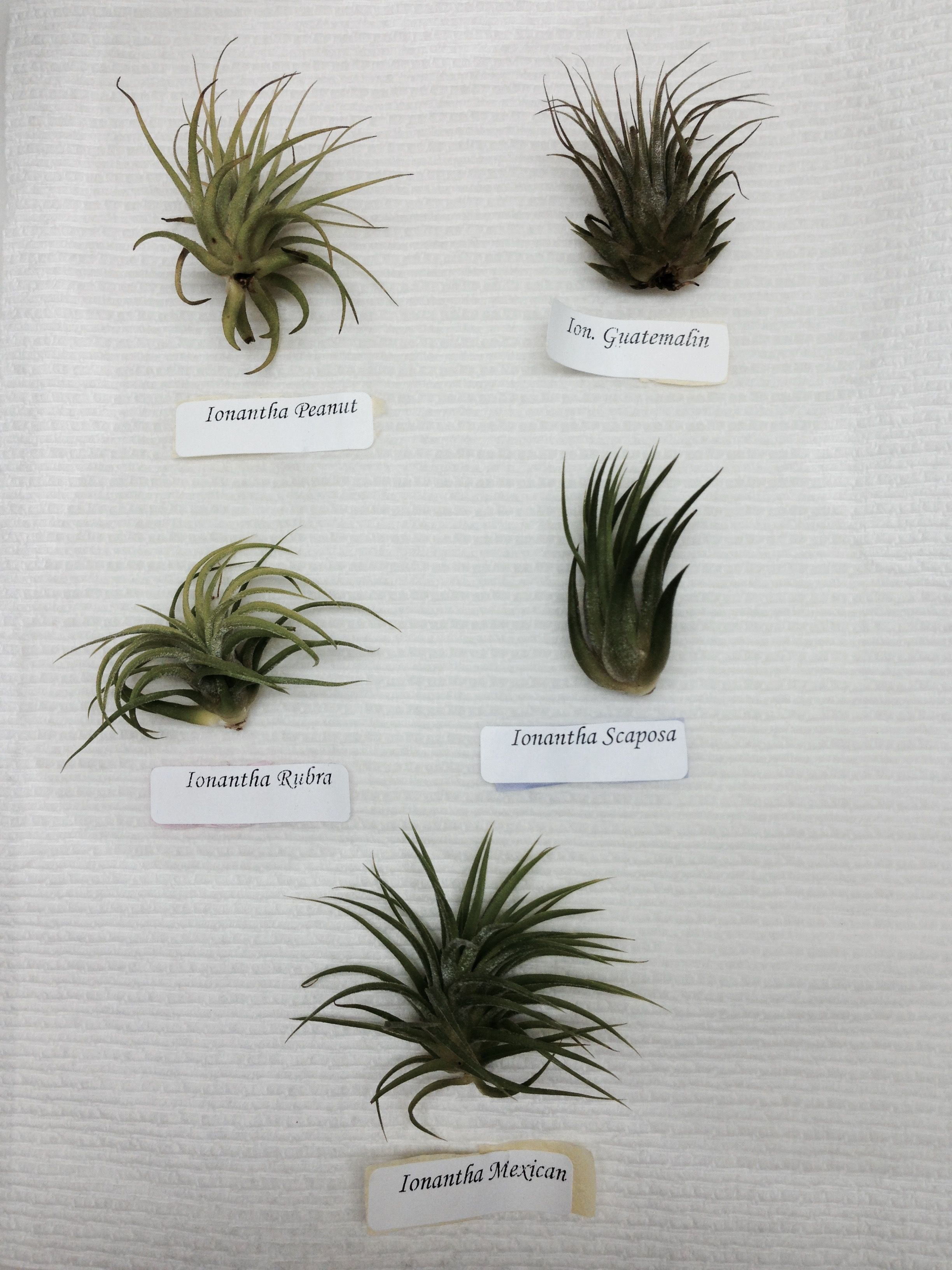 My Brand New Air Plants Still