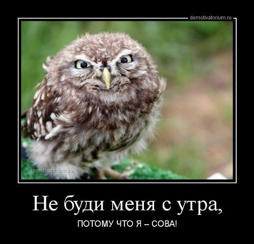 Не буди...   Смешные совы, Смешные фотографии животных ...