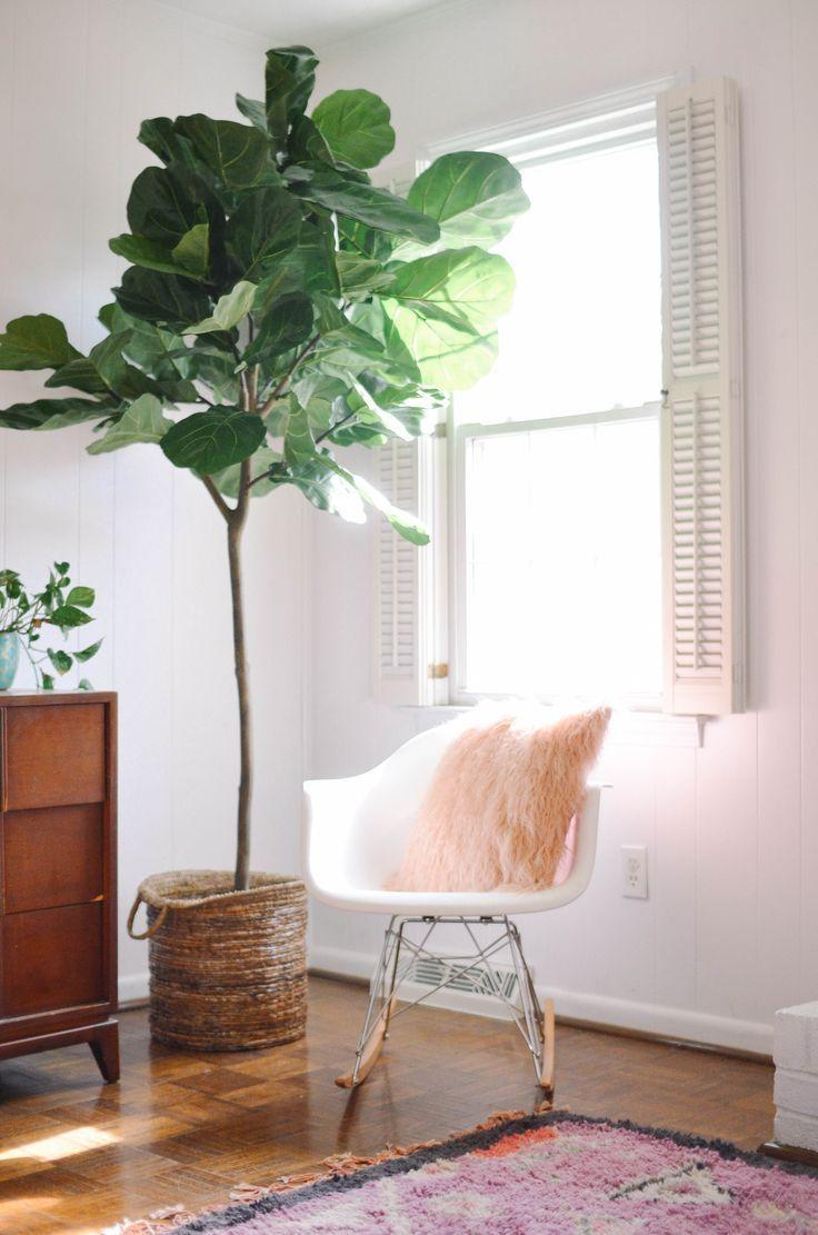 figuier en int rieur fleurs plantes flowers plants pinterest figuier int rieur et. Black Bedroom Furniture Sets. Home Design Ideas