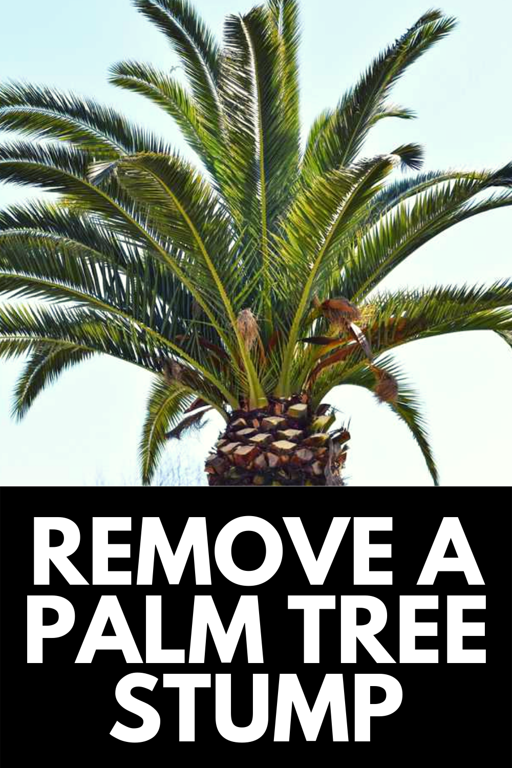 How To Remove A Large Stump Yourself A Simle Technique Tree Stump Stump Removal Removing Tree Stumps