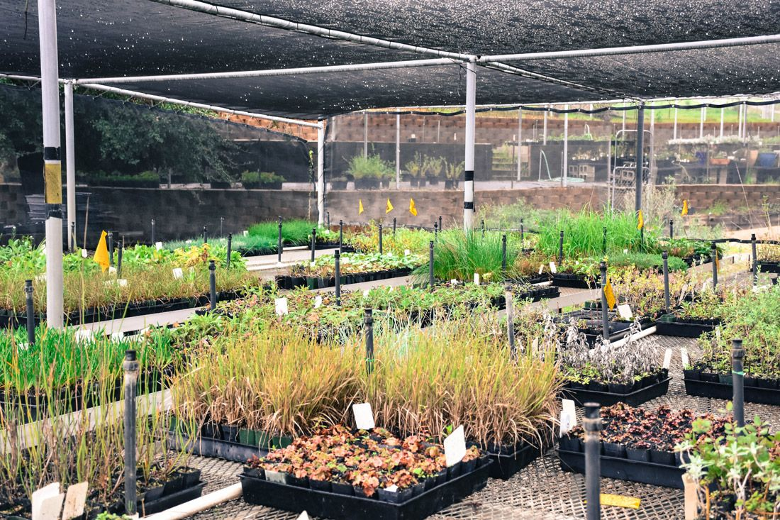 This Is Los Angeles Largest Native Plant Nursery Wholesale