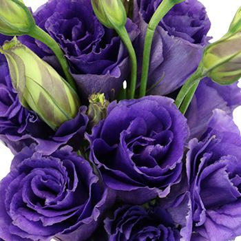 Hues Of Purple Lisianthus Flower For October To May Delivery June Flower Freesia Flowers Flowers