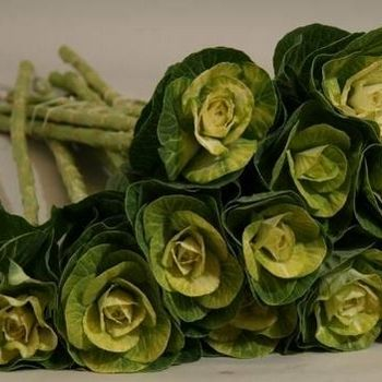 Wichita Florist | the Green Kale | in stock as of 3/11/2014 at Magnolia Floral Design in Wichita
