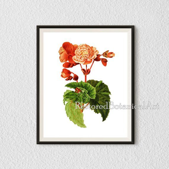 Vintage Botanical Posters A3 A4 Plants Wall Art Print Antique Floral Prints