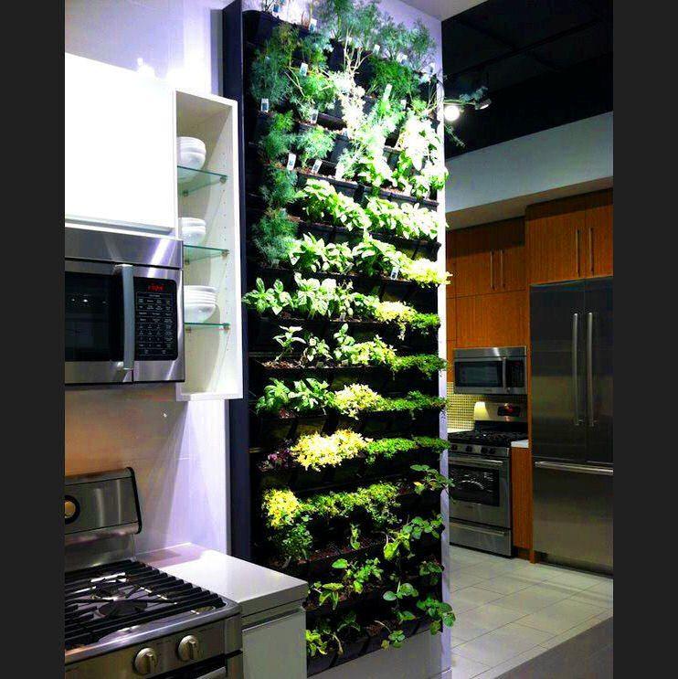 Modern Urban Agriculture And Its Benefits Herb Garden In Kitchen Kitchen Herbs Herb Wall