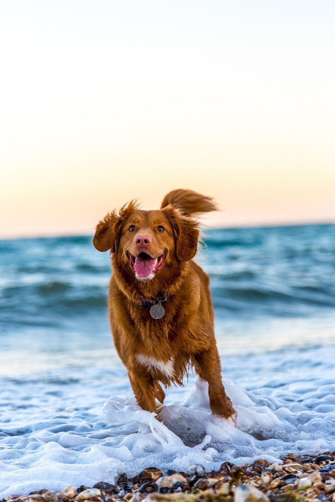 dog behavior training classes near me in 2020 Dog beach