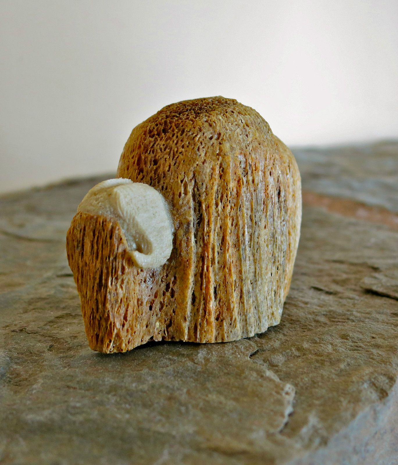 Alaska eskimo native whale bone musk ox carving by chris