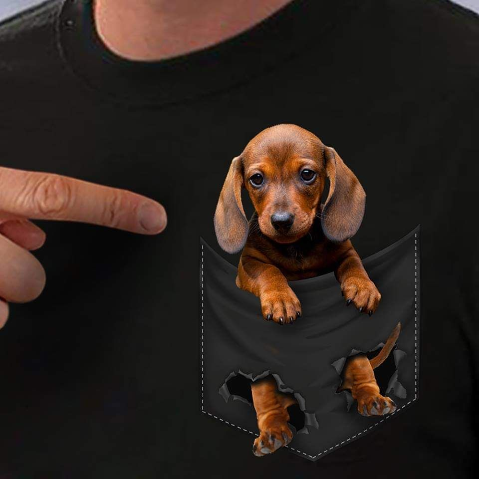 Dachshund In My Pocket Dachshund Pocket Weiner Weiner Dog