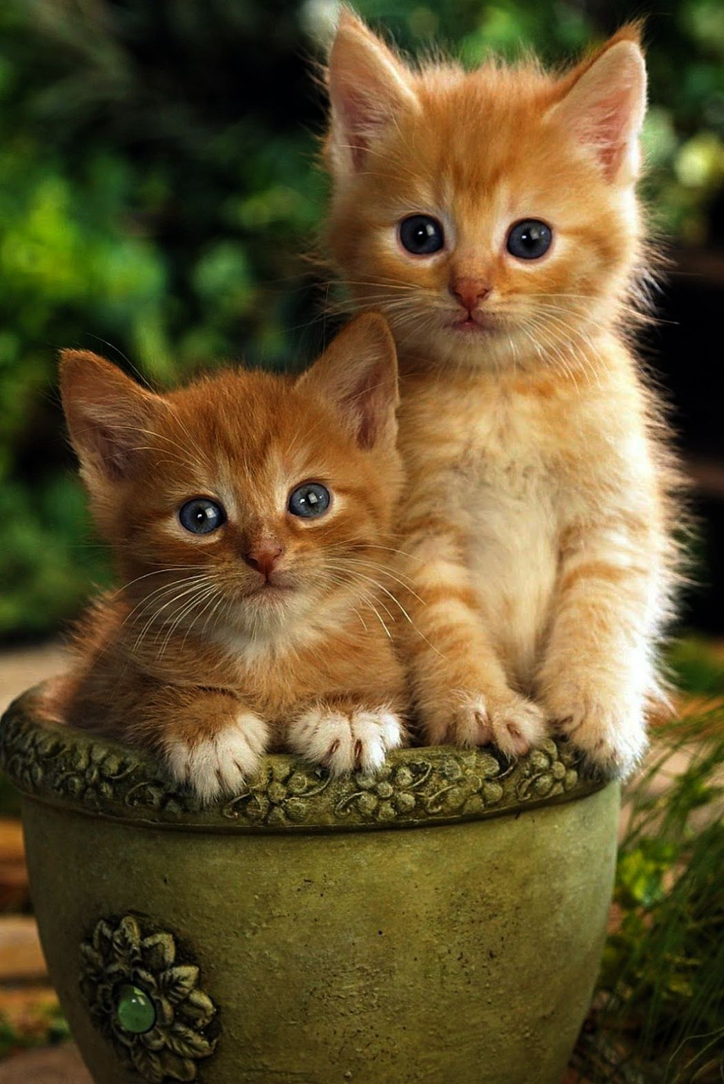Two Lovely Little Yellow Cats Kittens Cutest Cute Cats Cats