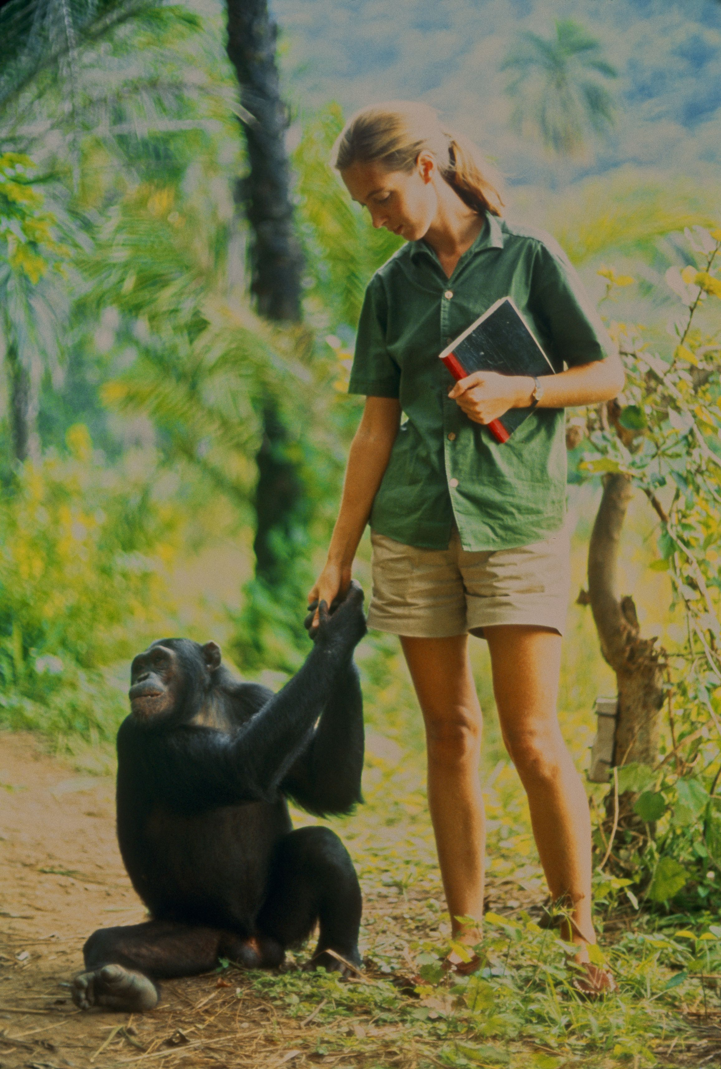 From Los Angeles Becoming Jane By Jordan Riefe Jane Goodall Chimpanzee Animal Photography