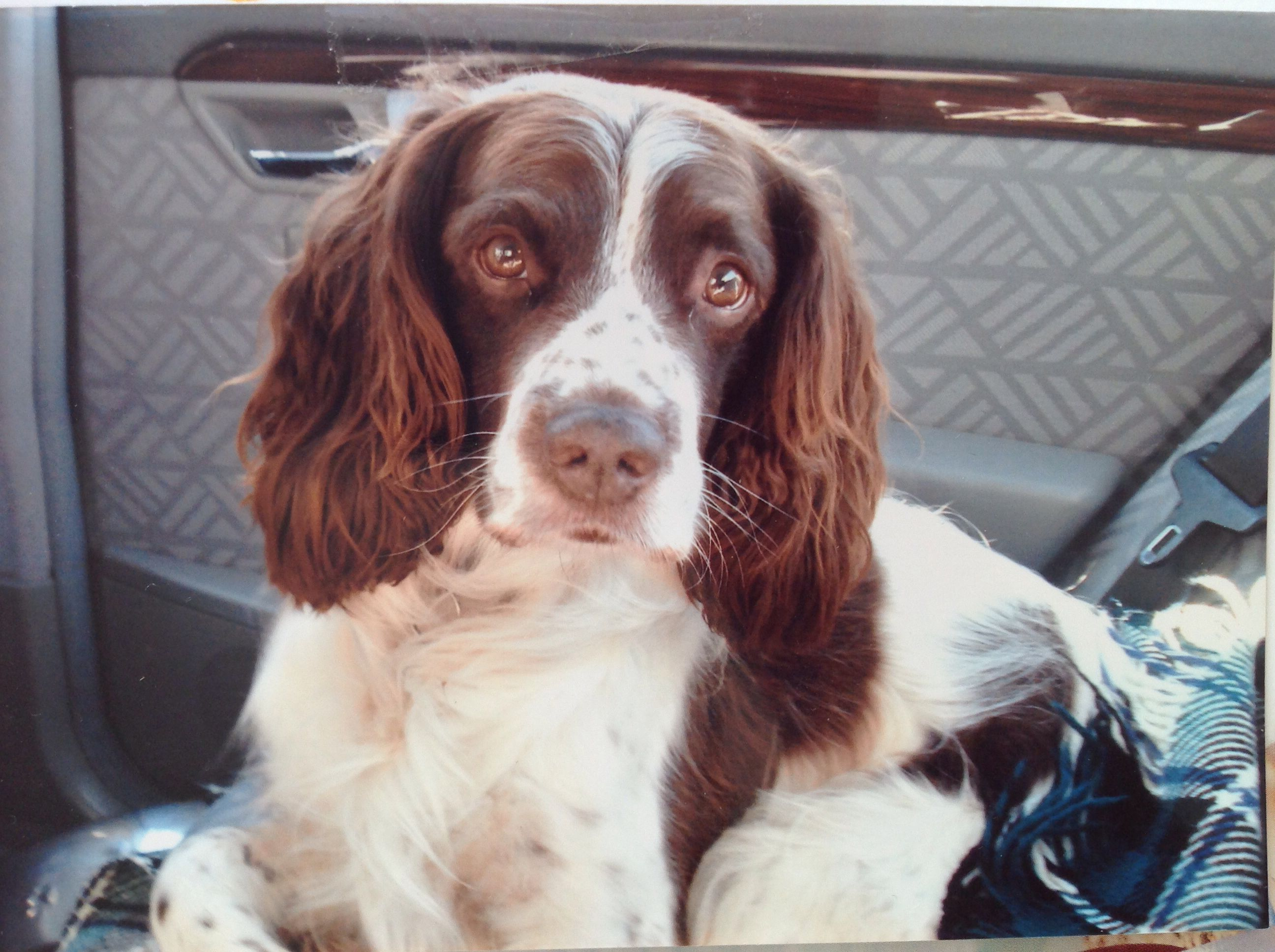Bosun in grannies car he was chips younger brother