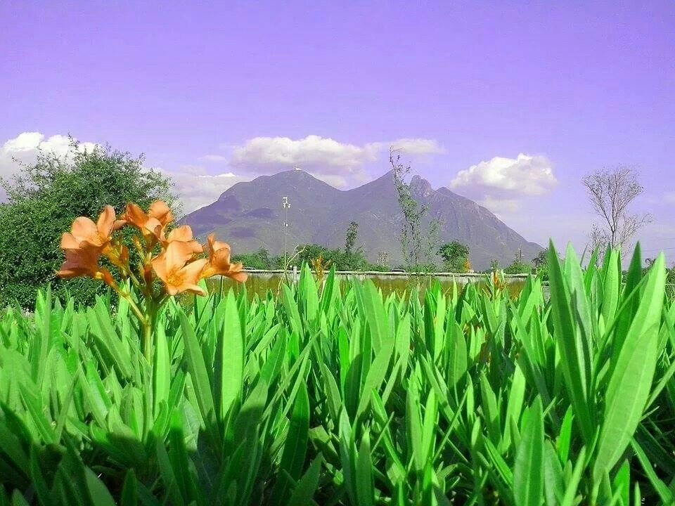 Cerro de la Silla, Monterrey Nuevo Leon