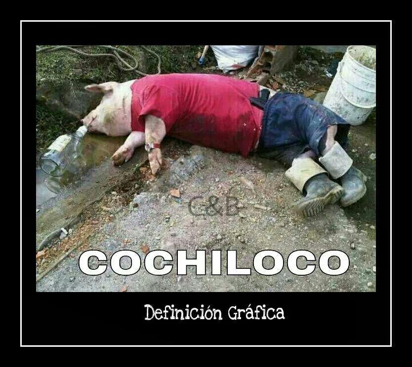 Cochiloco Chistes Borrachos Cerdos Divertidos Fotos De Risa