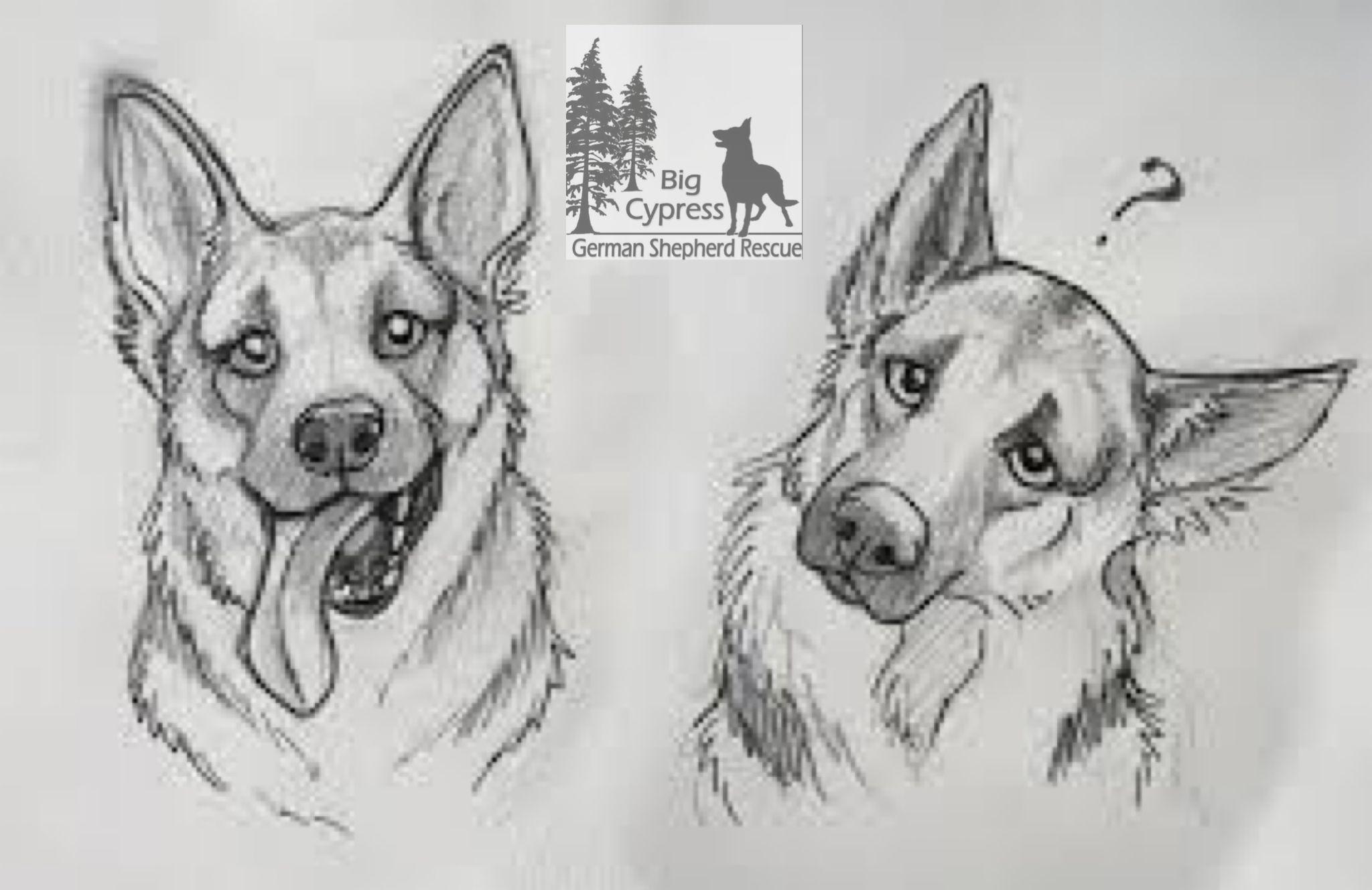 Why Do German Shepherds Tilt Their Head Wag Dog Drawing Animal Drawings Dog Sketch