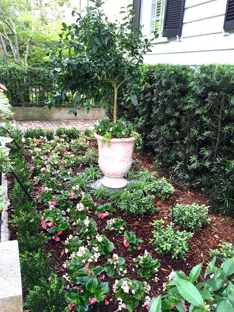 No Grass Front Yard Small Gardening Landscape Flowers Shade Large Pot Boxwoods Border Easy