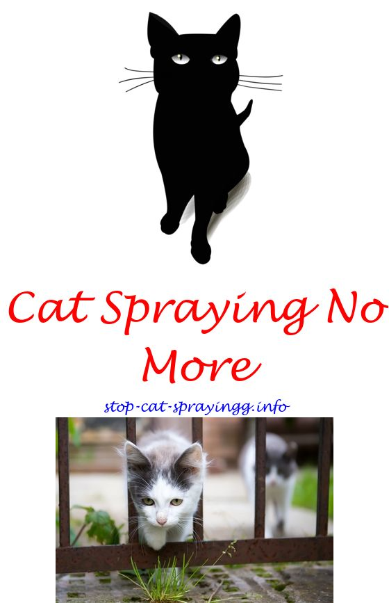 Perfect Cat Urine Marking Deterrent Anti Spraying Cat Spray   How To Get Cat Pee  Smell Out Of Furniture.why Do Male Cats Spray How To Get Rid Of Cat Wee Smu2026