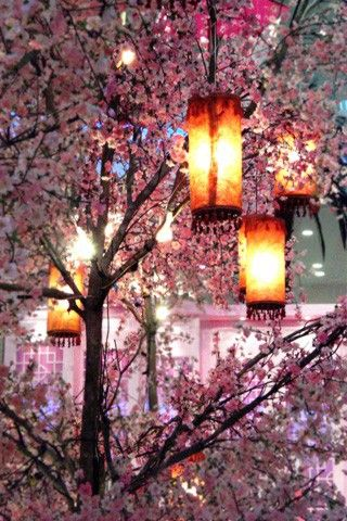 Beautiful Cherry Blossom Tree With Hanging Lanterns