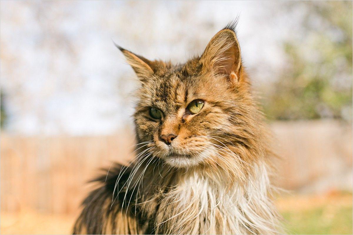 Boulder Colorado Outdoor Pet Cat Photography Cat Photography Cats Pet Photographer