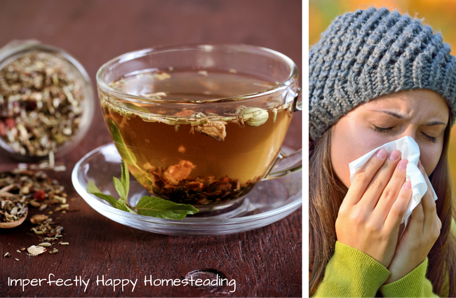 How to Make an Herbal Immune Boosting Tea -- Immune boosting tea is part of my arsenal to keep the family healthy during the cold and flu season. It is great to sip on during an illness but I like to drink it as a preventative measure too. After brewing you can mix in a bit of raw honey or a few drops liquid stevia to sweeten it, if you...