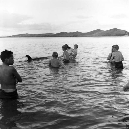Opo was a bottlenose dolphin who became famous throughout New Zealand during the summer of 1955-56 for playing with the children of the small town of Opononi in Northland NZ