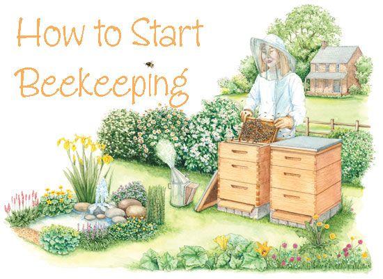 how to start beekeeping busy bees pinterest bienen imker and garten. Black Bedroom Furniture Sets. Home Design Ideas