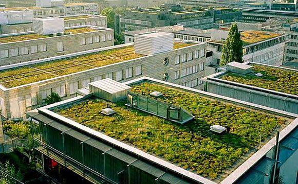 Prédios também podem ser beneficiados com o telhado verde, gerando economia de custos de energia (Foto: Pinterest)
