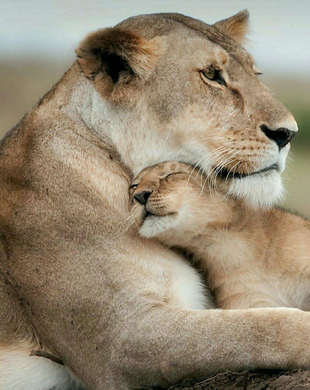 Amori Totalmente Amore Em 2020 Lindos Filhotes Animais