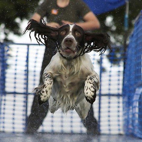 the flying swimmer