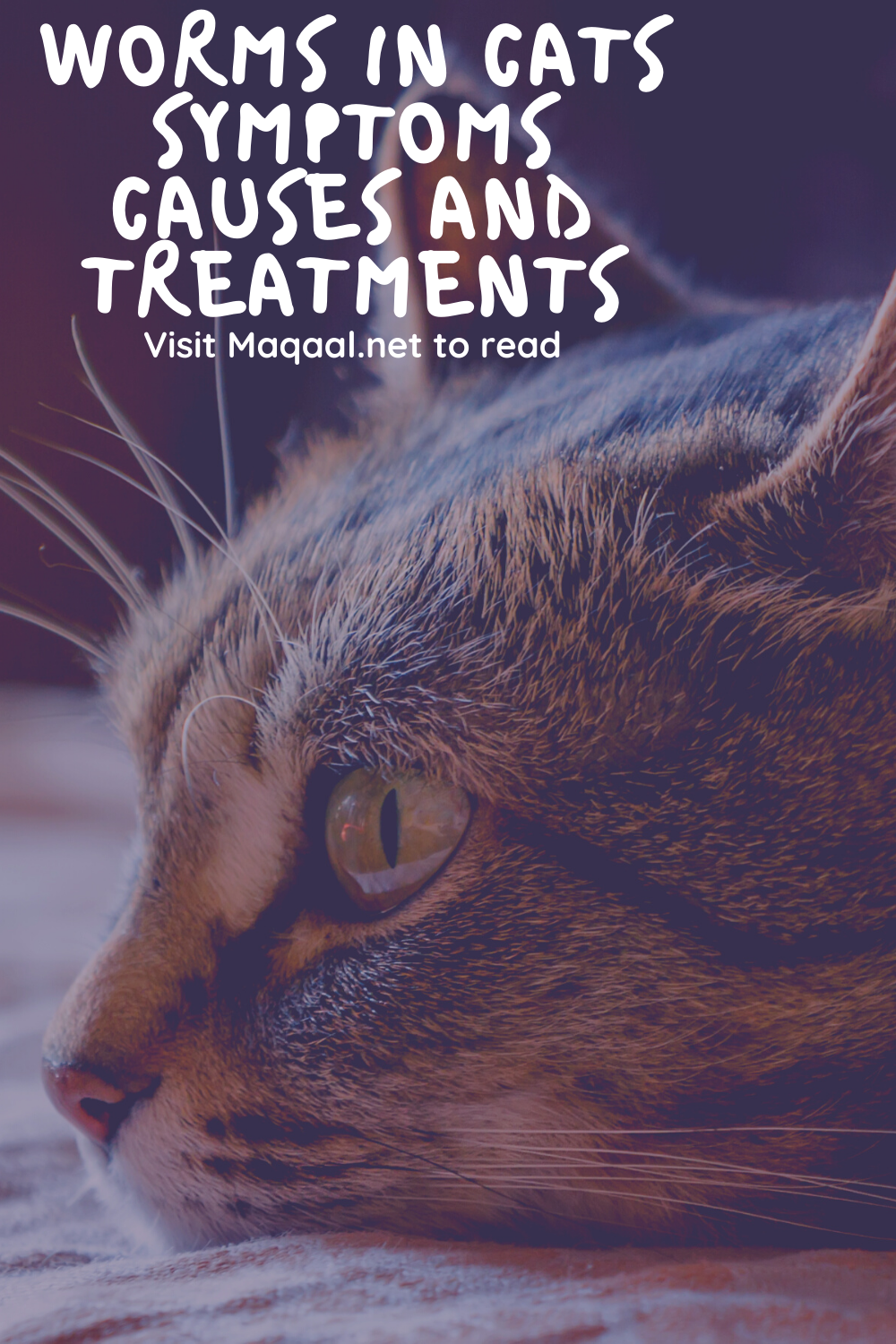 Worms In Cats Symptoms Causes And Treatments In 2020 Cats Cat Diseases Cat Medicine