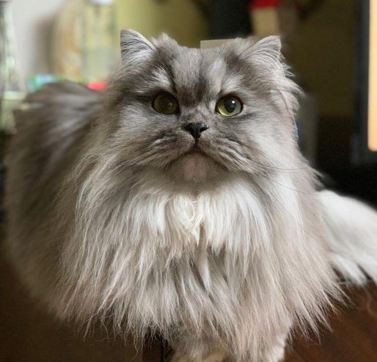 230 GenderNeutral Cat Names Cat names