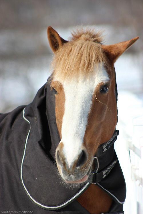 #Meatloaf #meatlug #pony #delval
