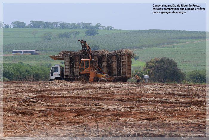 Canavial na região de Ribeirão Preto: estudos comprovam que a palha é viável para a geração de energia