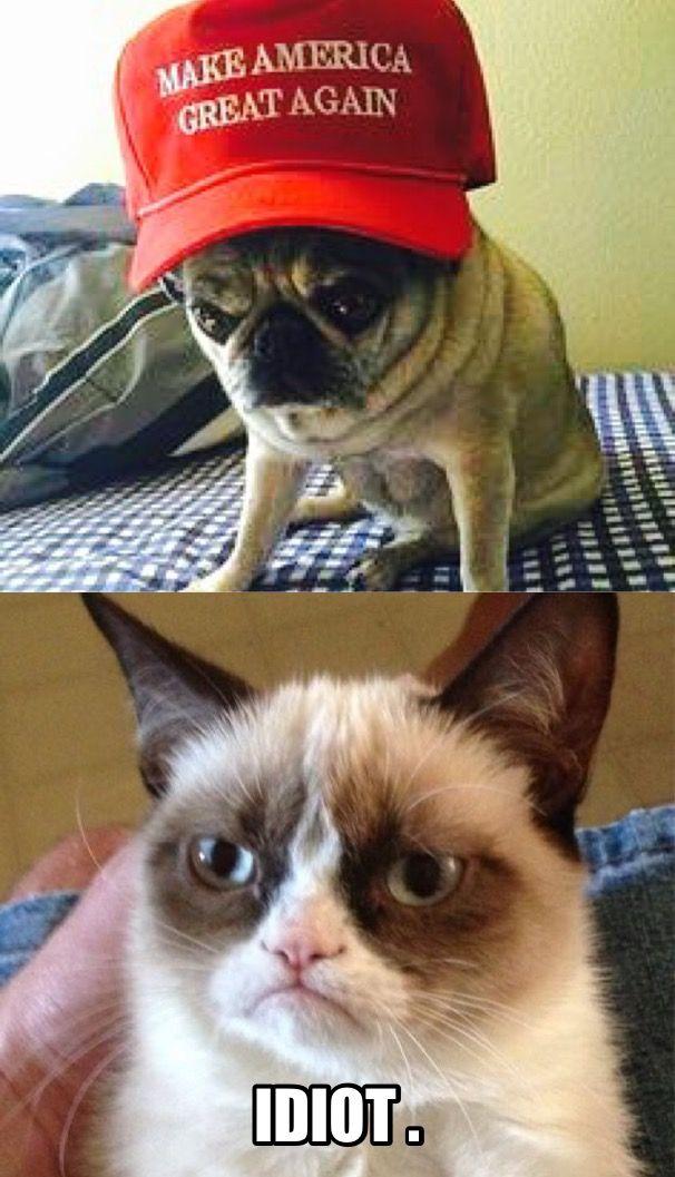 Pin by Peaches O on trumped Grumpy cat meme, Grumpy cat