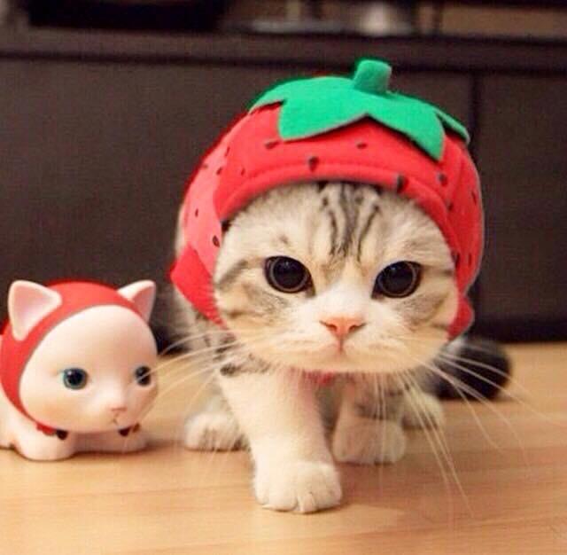 시월애. 돌아온 미곰. on Cute cats, Cute animals, Crazy cats