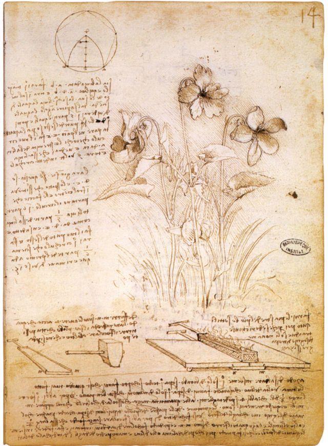 Leonardo da vinci, figure geometriche e disegno botanico, 1490 circa, parigi, bibliothèque de l'institut de france.jpg