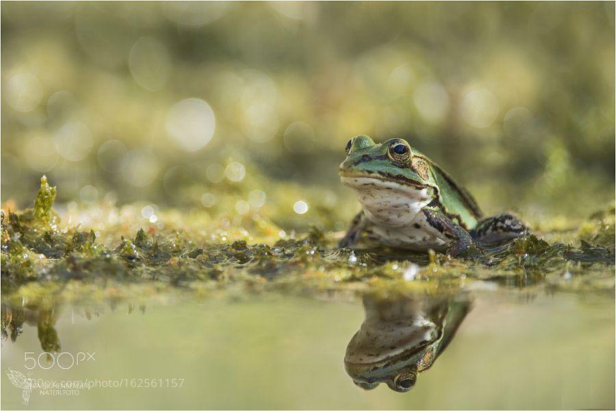 Spieglein Spieglein...... by iseichenberger #nature #photooftheday #amazing #picoftheday