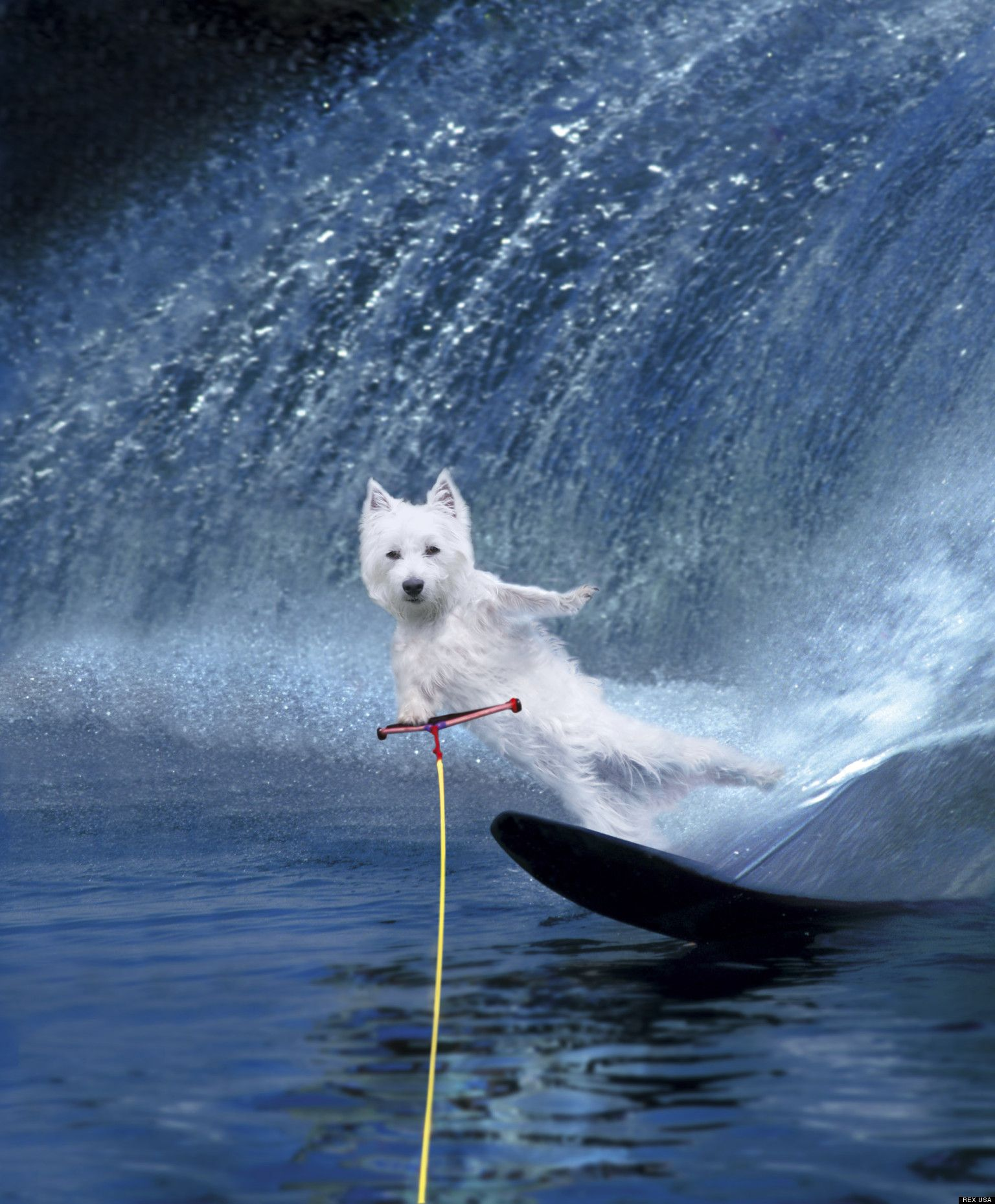 Wakeboarding Dogs! (PHOTOS) | Pinterest | Wakeboarding and Dog