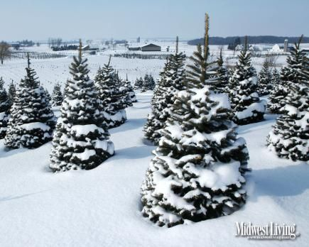Decorate Your Desktop With Our Christmas Photos Christmas Desktop Christmas Tree Farm Desktop Photos