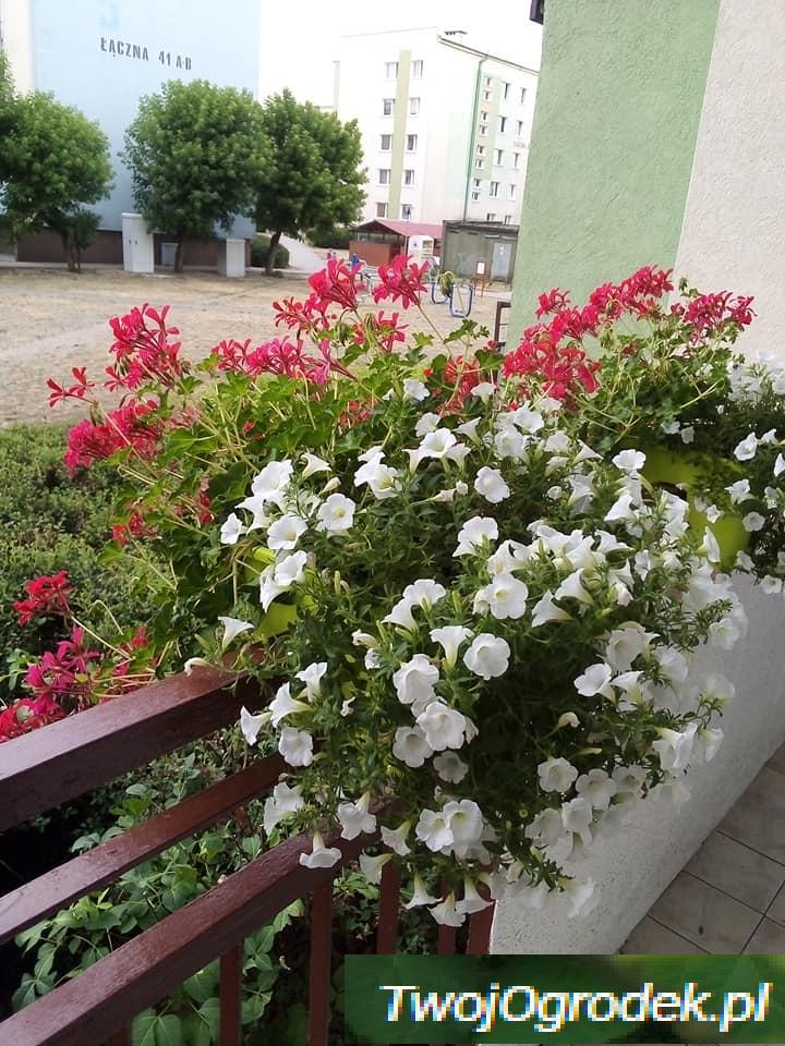 Kwiaty Dodaja Uroku Kazdej Przestrzeni Plants