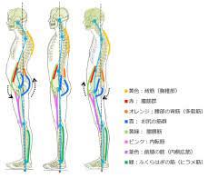 筋 腰 方形 腰方形筋が腰痛を引き起こす