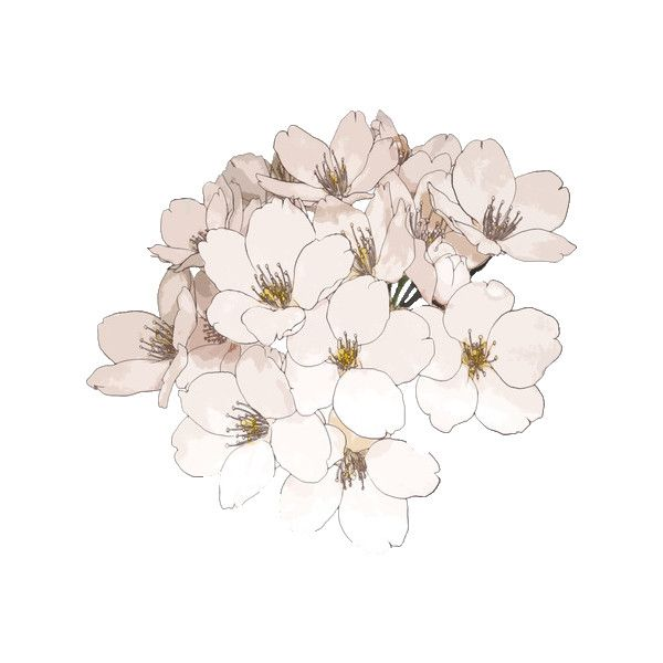 Tumblr Transparent Flowers Black And White