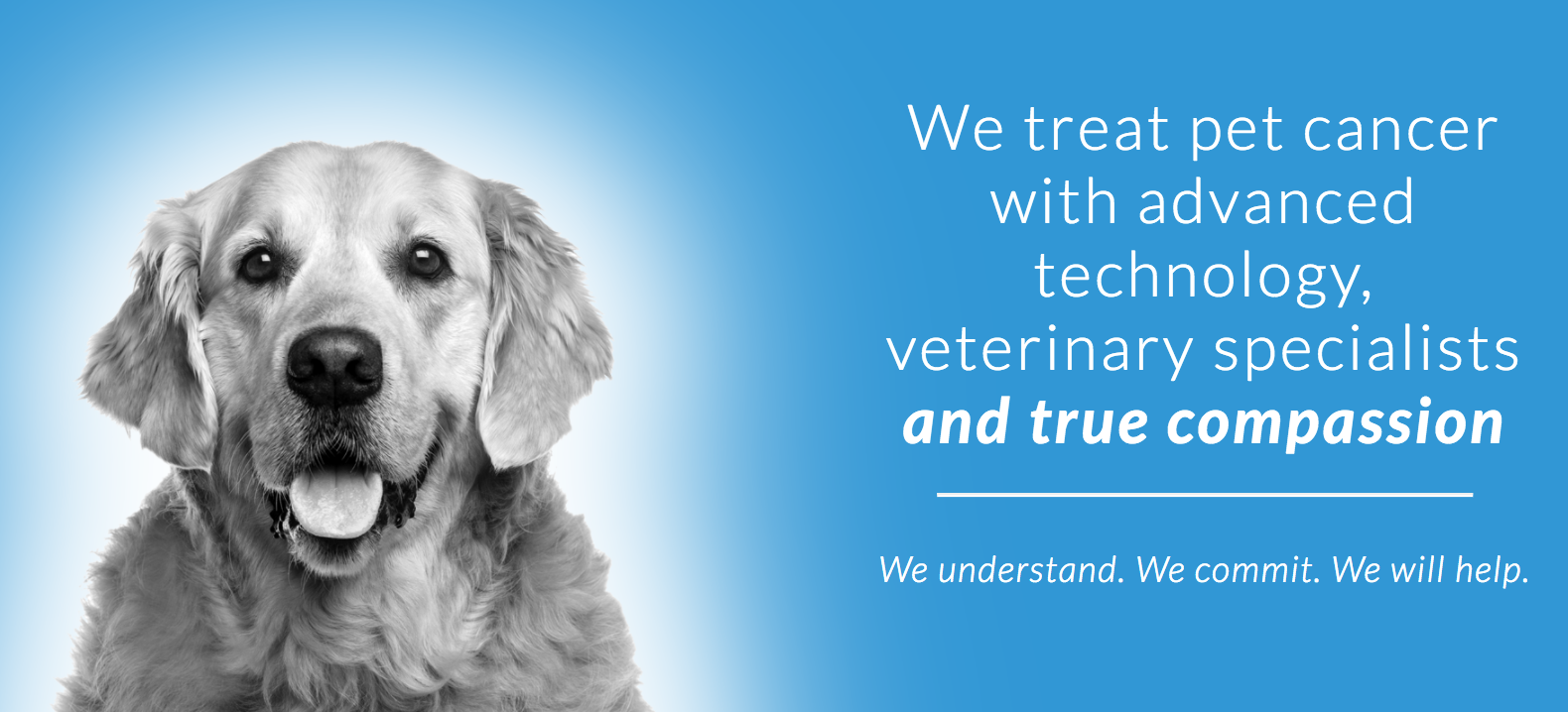If your pet has been diagnosed with cancer, contact a