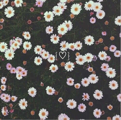 background, cool, cute, daisy, emoji, floral, flower ... Hipster Flower Background Tumblr