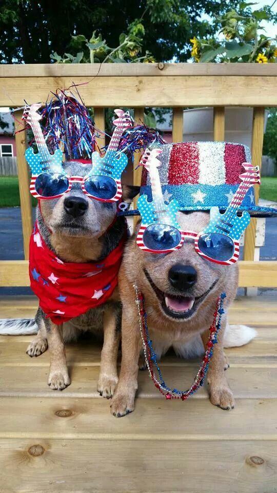 Happy Birthday America Australian Cattle Dogs Rule My