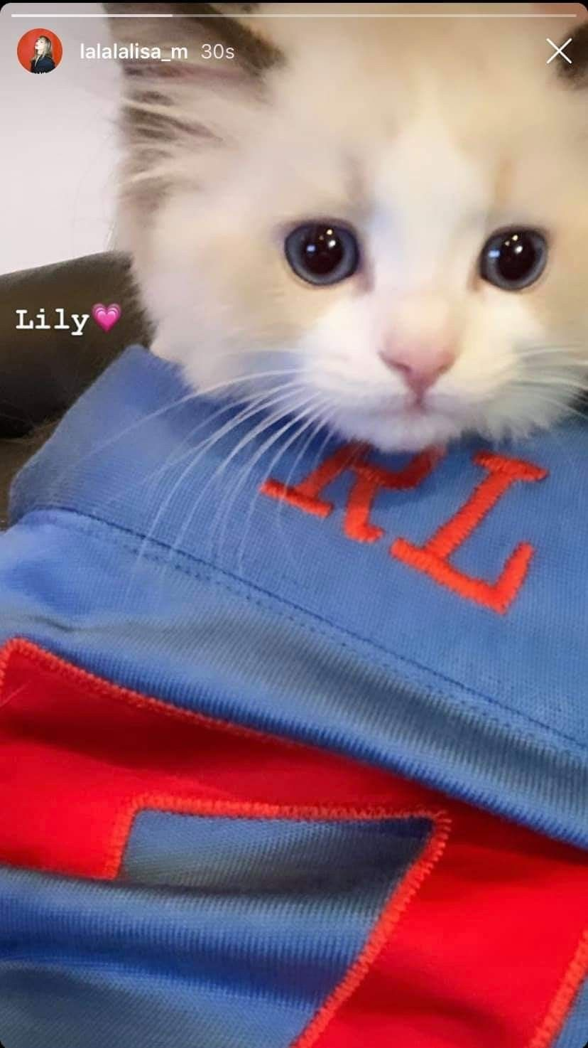 Print Crop Top Kittens Cutest Cute Baby Cats Orange Kittens